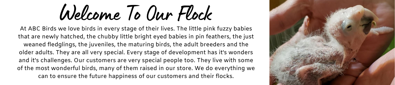 Welcome To Our Flock