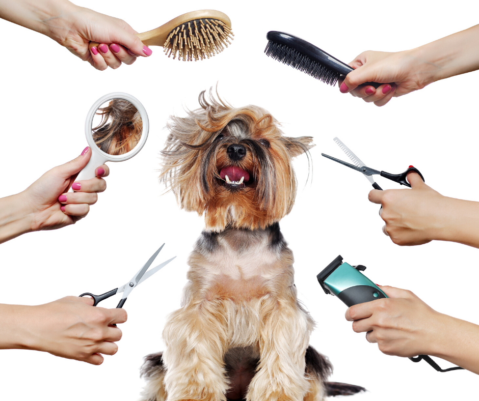 Grooming Services