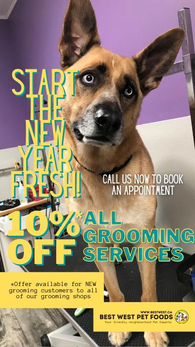 Pet Grooming Discount 10% Off