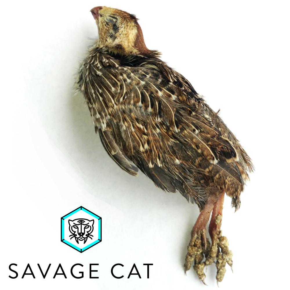 Savage Cat Snacks Whole Quail Raw Frozen Dog & Cat Treat, 2-pack