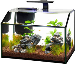 Aqueon LED Shrimp Aquarium Kit, 7.5-gal