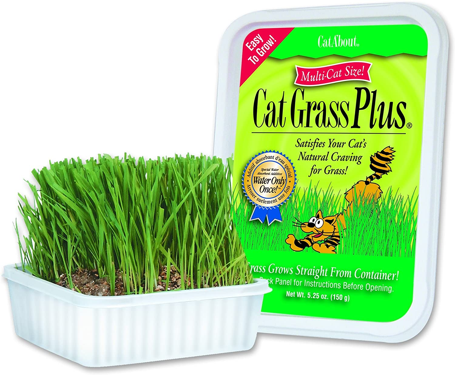Cat A'bout Cat Grass Plus for Cats