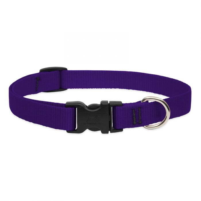 Lupine Pet Basic Solids Martingale Dog Collar, Purple, 3/4-in x 10-14-in