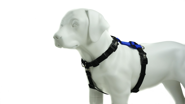 Blue-9 Balance Harness Buckle-Neck Dog Harness, Blue, Medium/Large