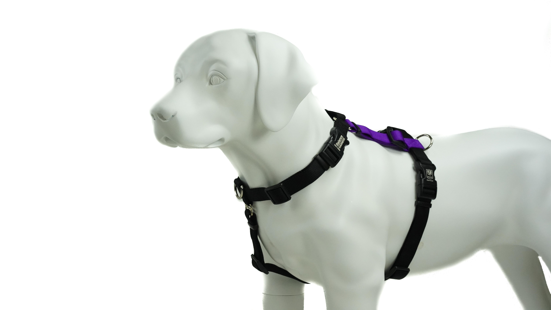 Blue-9 Balance Harness Buckle-Neck Dog Harness, Purple, Medium