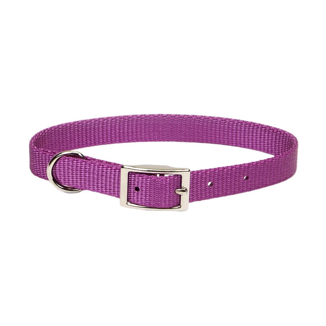 Coastal Single-Ply Dog Collar, Orchid, 5/8-in x 14-in