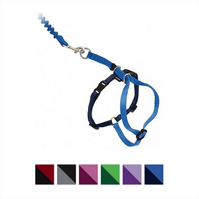 PetSafe Come With Me Kitty Harness & Bungee Cat Leash, Royal Blue/Navy, Small