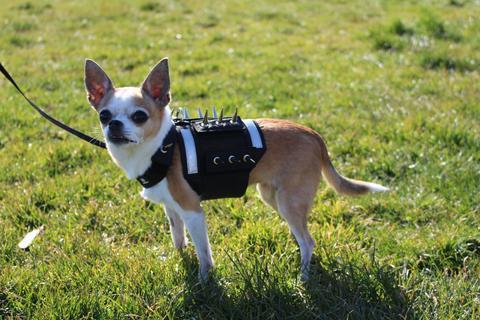 Predatorbware Protection Dog Vest, XX-Small