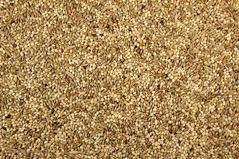 Leach Grain Parakeet 42.00% Food, 50-lb