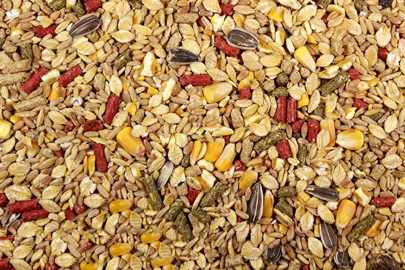 Leach Grain Hamster, Rat & Mouse Mix Food, 25-lb