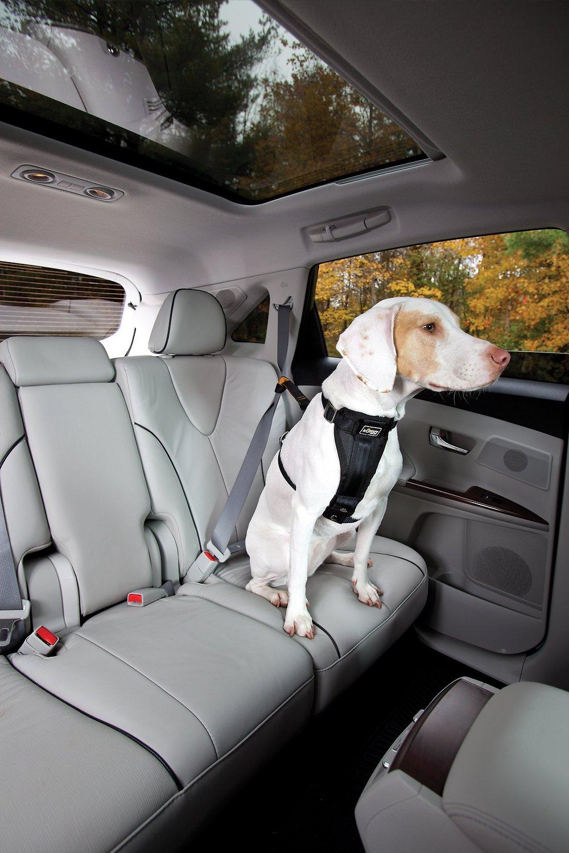 Kurgo Seat Belt Tether Image