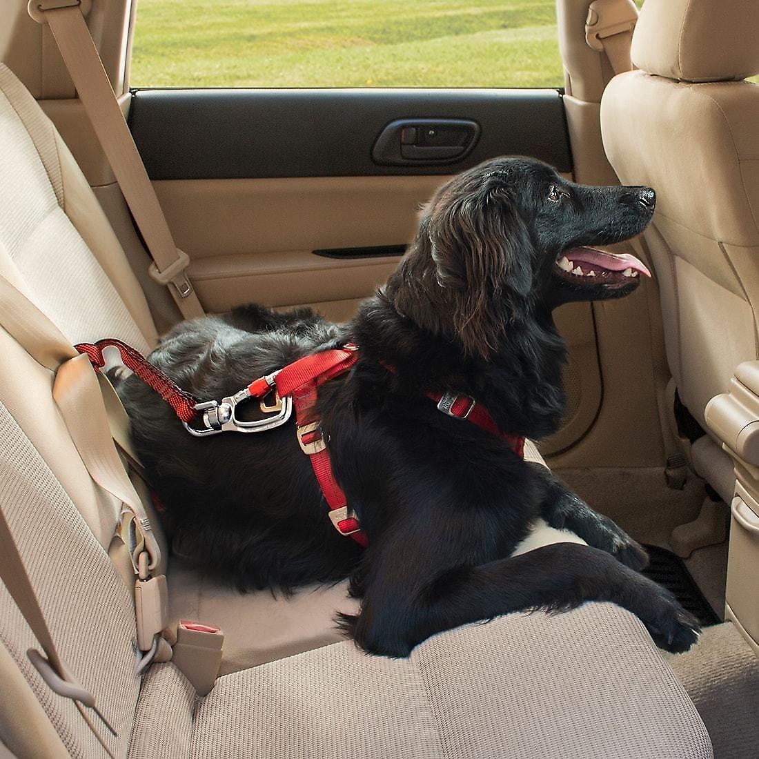 Kurgo Swivel Seat-Belt Tether