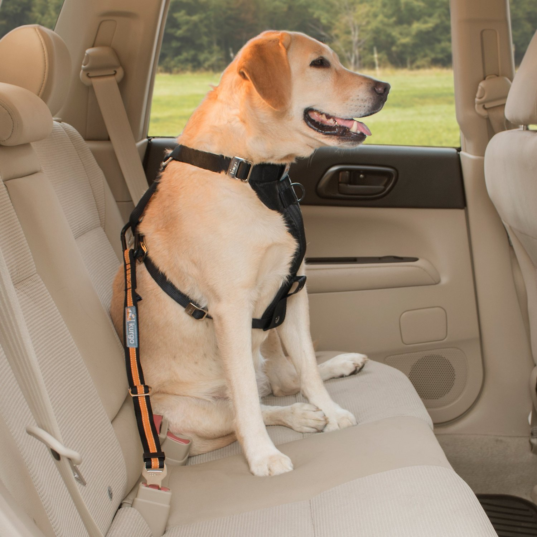 Kurgo Direct to Seat-Belt Tether with Carabiner - Black/Orange