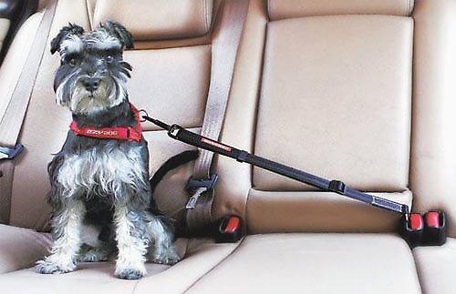 EzyDog Click Adjustable Seat Belt Restraint, Black