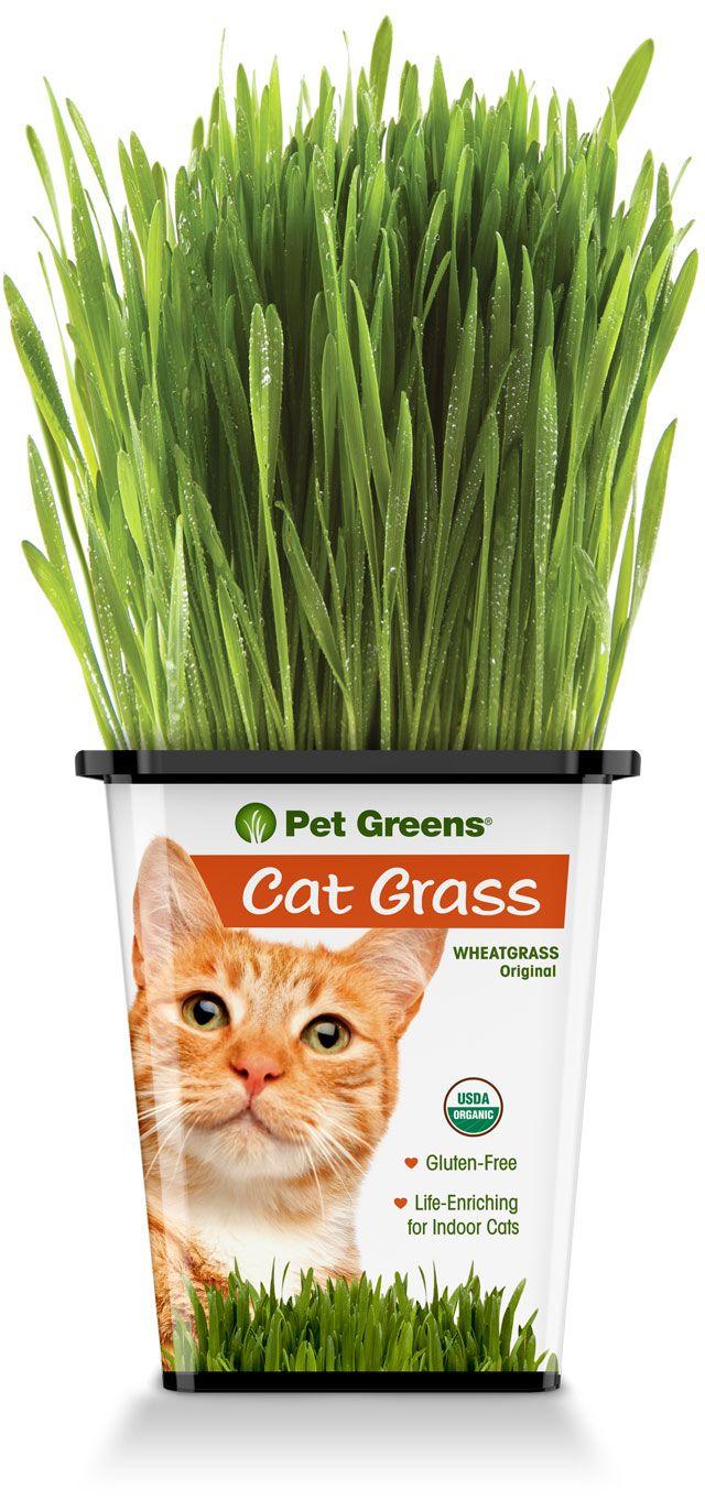 Pet Greens Original Wheatgrass
