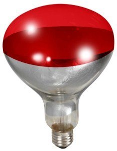 Heat Lamp Bulb for Brooder Reflector - Red 250w Image