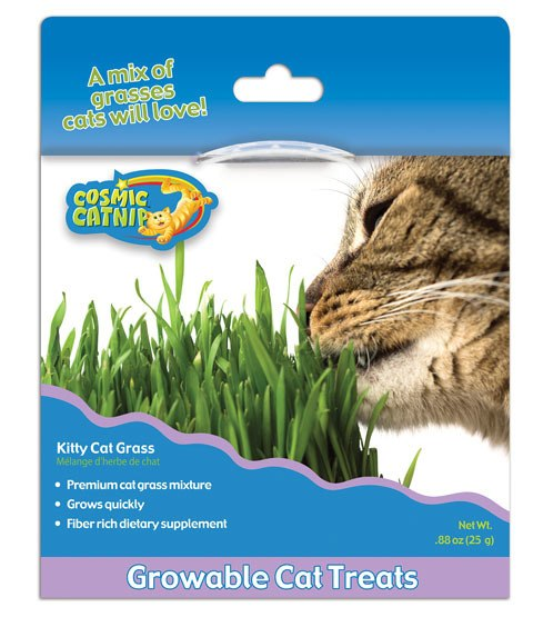 OurPets Cosmic Kitty Cat Grass, .88-oz