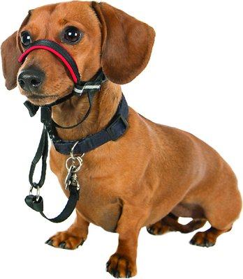Halti OptiFit Dog Headcollar, Small