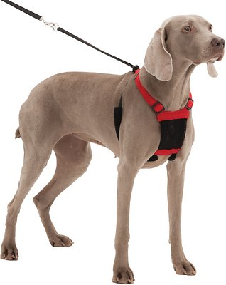 Sporn Non-Pull Mesh Dog Harness, Red, Large/X-Large