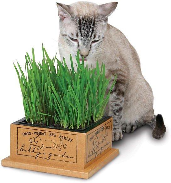 Pioneer Pet SmartCat Kitty's Garden