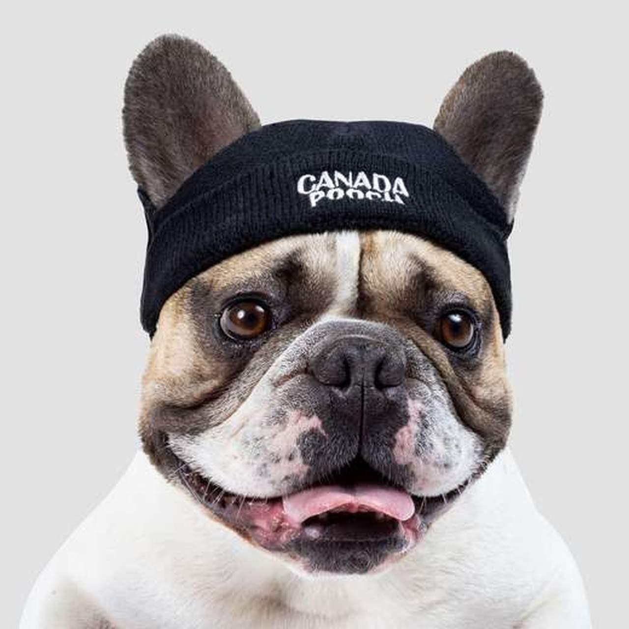 Canada Pooch Basic Dog Beanie, Black, Large
