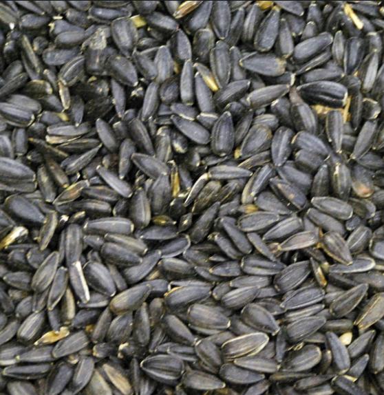 Prince Black Oil Sunflower Wild Bird Feed, 50-lb