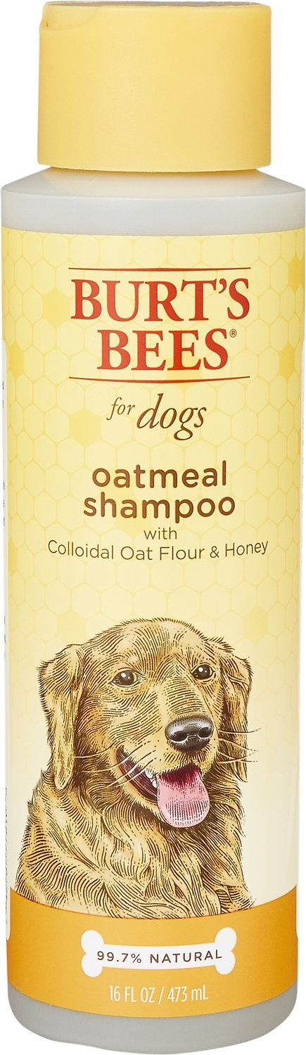 Burt's Bees Oatmeal Shampoo with Colloidal Oat Flour & Honey for Dogs, 16-oz bottle Image